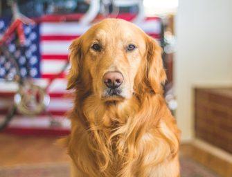 Best Dog Shampoo for Shedding Reviewed [2021]