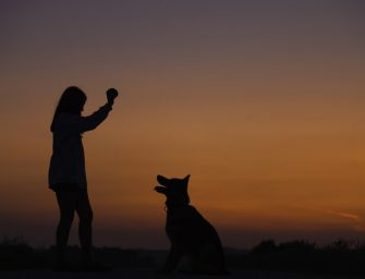 How To Do Obedience Training For Dogs