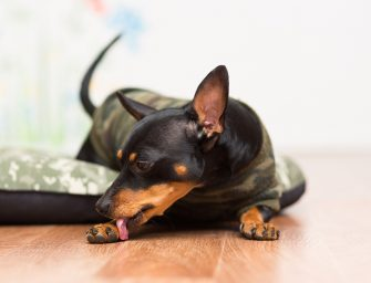 Best Dog Licking Paws Remedies To Use On Dogs at Home
