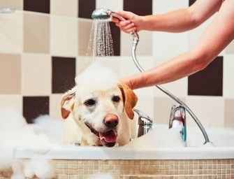 Can You Use Baby Shampoo on Dogs?