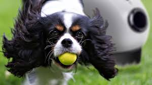 The Best Automatic Dog Ball Thrower For Play